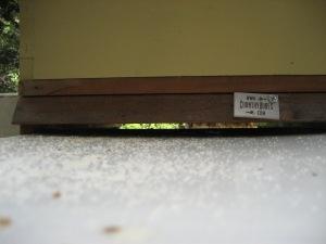 Bee-tray