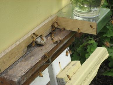 BeesRback