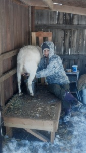 0-Milking 2012-12