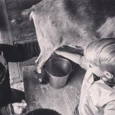 2016-kids-milking